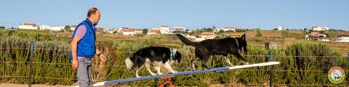 Treino Canino