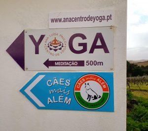 Local - Centro de Treino Canino | Cães mais Além